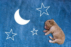 Dreaming puppy Royalty Free Stock Image