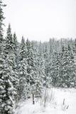 Dreaming winter landscape Stock Photo