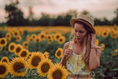 Dreaming young woman in yellow dress and hat holding hairs with hands in a field of sunflowers at summer, view from her front. stock photo