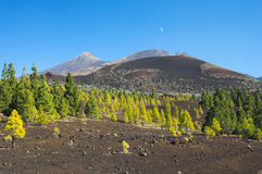 Dreamland. Fairylike landscape found on the beautiful island of Tenerife Royalty Free Stock Images