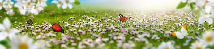Dreamland spring landscape panorama with flowers and butterflies. Dreamland landscape with a meadow covered by spring flowers and butterflies flying towards the royalty free stock image
