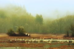 Dreamlike fog in Wildlife Refuge Landscape. Fog softens this dreamlike scenic wildlife refuge landscape where geese and ducks inhabit the skies and wetlands Stock Photography
