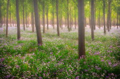 Dreamlike forest. With flowers overspread the land in spring Stock Image