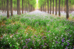 Dreamlike forest. With flowers overspread the land in spring Royalty Free Stock Image