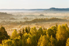 Dreamlike Landscape. At the Torronsuo swamp in Finland on an early morning. Distant forest covered by the fog Royalty Free Stock Images