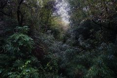 A Dreamlike Thicket Early Morning. Full of trees and bushes. Cold Tone Stock Photos