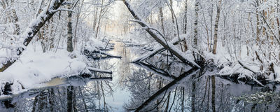 Dreamlike woodland and river by winter morning Stock Photography