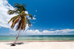 Dreams beach. This is beaautiful beach with coconut palm and sea Royalty Free Stock Photo