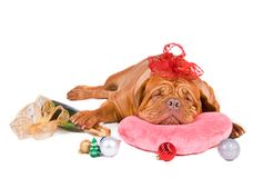 Dreams of Christmas Royalty Free Stock Photography
