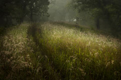 Dreams of Grass. A grassy hillside trail on a early foggy morning Stock Photo