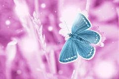 Magic blue butterfly flying in pink field. Dreams meadow with flying blue butterfly. Surreal fairytale beauty spring garden, magic morning in enchanted pink stock image