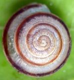 Dreamstime商标极为相象的蜗牛壳 免版税库存照片
