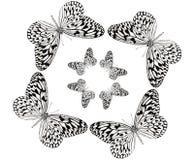 Dreamstime1-vlinder het dansen no.7 Royalty-vrije Stock Fotografie