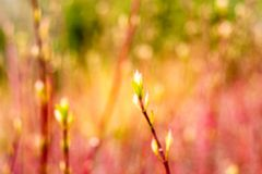 Dreamy. Defocused image for use as background or for decorative purpose royalty free stock photography