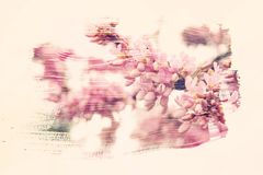 Dreamy and abstract image of cherry tree. double exposure effect. With watercolor brush stroke texture royalty free illustration