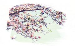 dreamy and abstract image of cherry tree. double exposure effect Royalty Free Stock Images