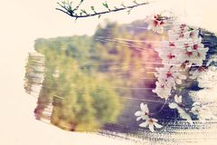 Dreamy and abstract image of cherry tree. double exposure effect with watercolor brush stroke texture. Dreamy and abstract image of cherry tree. double exposure royalty free illustration