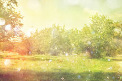 Dreamy and abstract image of the old trees Royalty Free Stock Photos