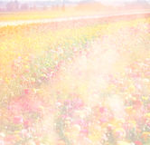 Dreamy abstract photo of wild flower field and bright bokeh lights. cross proccess effect.  Royalty Free Stock Photos
