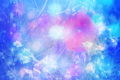 Dreamy artistic daisies with bokeh lights Royalty Free Stock Photo