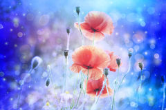 Dreamy artistic poppies with bokeh lights Stock Photography