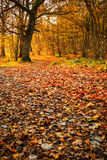 Dreamy autumn day in forest Stock Photos