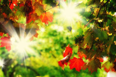Dreamy autumn foliage. First colorful leaves in autumn Stock Images