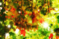 Dreamy autumn foliage Stock Images