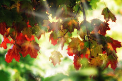 Dreamy autumn foliage Stock Photography