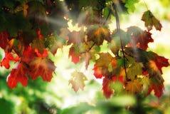 Dreamy autumn foliage. Dreamy, colourful autumn foliage with sunrays Stock Photography