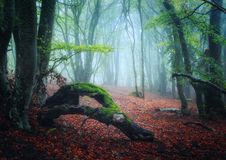 Scary autumn forest with trail in fog. Fall colors. Foggy trees stock images