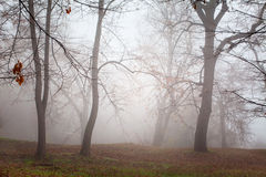 Dreamy autumn forest with fog Royalty Free Stock Photography