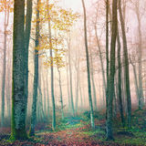 Dreamy autumn forest Stock Photo