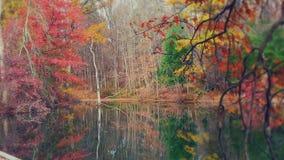 Dreamy autumn lake Royalty Free Stock Image