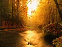 Dreamy  autumn mountain river covered by orange beech leaves. Fresh green leaves on branches above water make colorful refle Stock Images