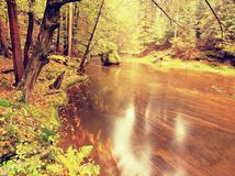 Dreamy  autumn mountain river covered by orange beech leaves. Fresh green leaves on branches above water make colorful refle Royalty Free Stock Image