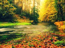 Dreamy  autumn mountain river covered by orange beech leaves. Fresh green leaves on branches above water make colorful refle Royalty Free Stock Photography