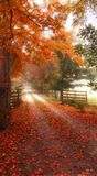 Dreamy Autumn Road. Colorful autumn path with fences Stock Photos