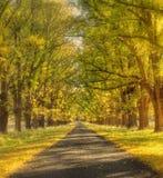 Dreamy autumn road stock photos
