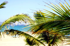 Dreamy Beach. View of beach through palm fronds Stock Images