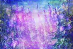 Dreamy beautiful background with meadow of flowers Royalty Free Stock Photos