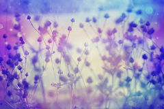 Dreamy beautiful floral background Stock Images
