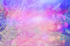 Dreamy beautiful floral background with bokeh lights Royalty Free Stock Image