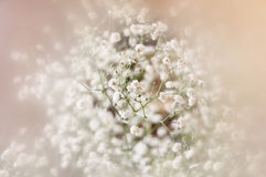 Dreamy and blurred image of spring flowers. vintage filtered and toned Royalty Free Stock Images