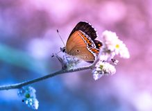 Dreamy butterfly sitting on flower pink blue background royalty free stock images