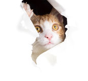 Dreamy cat looks through a hole in paper Stock Photo