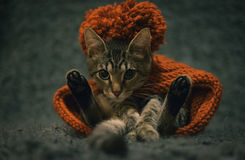 Dreamy cat Stock Images