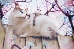 Dreamy cat. A cat sitting on a fence staring off into the distance Royalty Free Stock Images