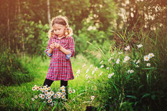Dreamy child girl in plaid dress on the walk in summer day with bouquet of chamomile flowers Royalty Free Stock Images