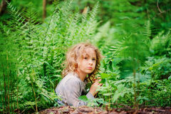 Dreamy child girl playing and hiding in wild ferns in summer forest Royalty Free Stock Photography